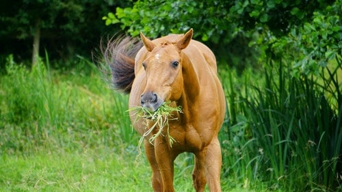 What Can Horses Eat From Human Food?