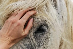 Skills and Qualities of Good Horse Riders