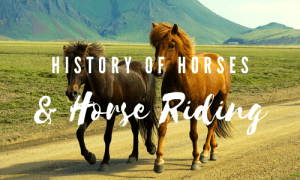 History of Horses and Horse Riding