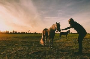How To Control A Horse While Riding
