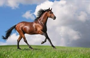 Best Horse Breeds For Riding