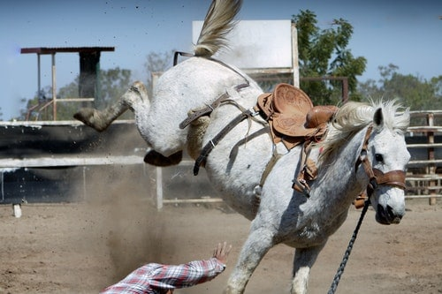 How To break A horse For Riding- How Long Does It Take?