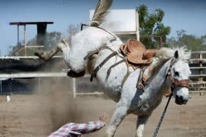 Top 10 Beginner Horse Riding Mistakes