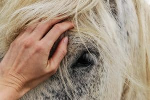 How To Get Your Horse To Trust You Completely