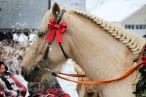 Different Types Of Horse Braids