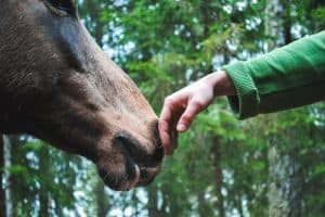 8 Sure Ways On How To Approach A Horse For The First Time