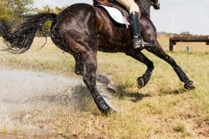 14 Important Qualities of a Good Horse rider