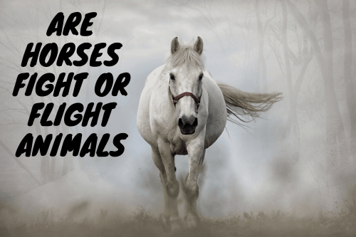 Are Horses Fight Or Flight Animals?
