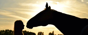 horse riding guides