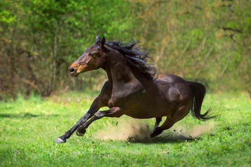 Too Much Protein in Horses Diet - Effects, Benefits and What to worry about.