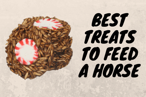 Best Treats To Feed A Horse