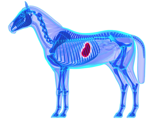 What is the Recommended Diet for Horses with Ulcers