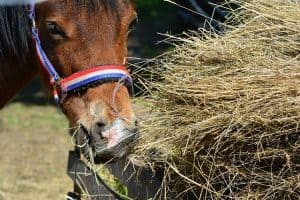 Supplementing Your Horse's Diet With Hay