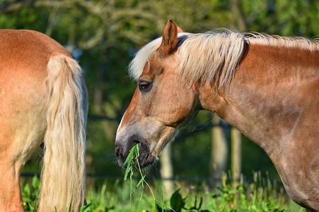 Can Horses Survive On Grass Alone