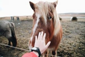 10 Mistakes People Make While Buying Their First Horse