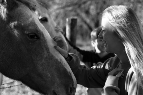 Do horses feel love?