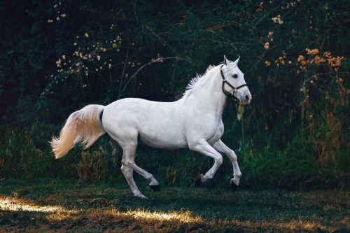 Which horse breed is the smartest?