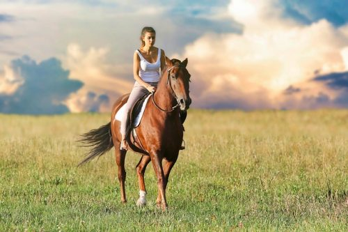 Is Horse Riding Good For The Horse?