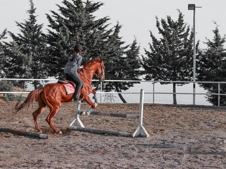 Does Horse Riding Hurt The Horse?