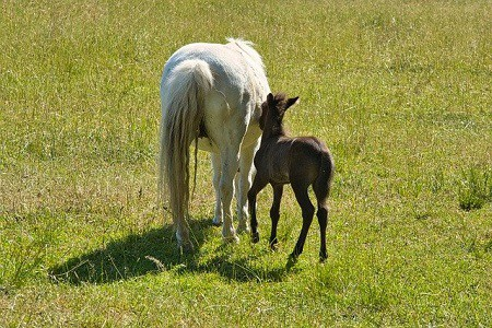 Name for Baby Horse
