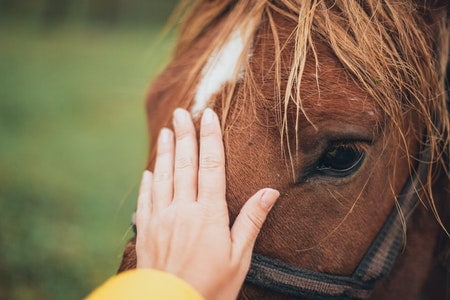 Why don't horses vomit