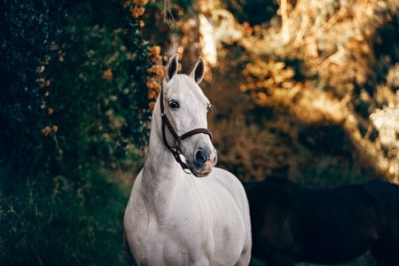What to Feed Overweight Horse
