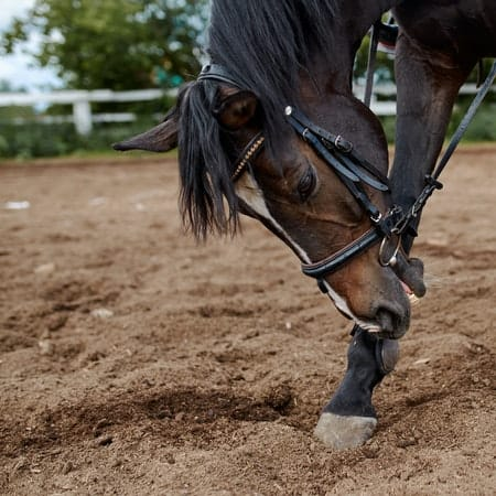 Can a Horse with Navicular be Ridden?