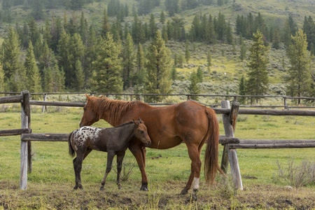 Can Horses Have Autism?