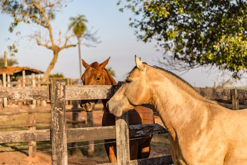 Quarter Horse vs Thoroughbred – Key Differences