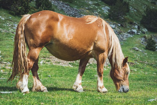 Fun facts about Shire Horses