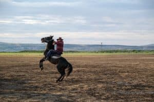 How Far Can A Horse Travel In A Day?