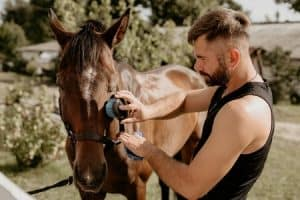Best Grooming Kits for Horses