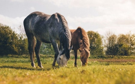Does Beer Help Colic in Horses?
