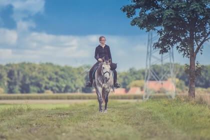 Percheron Horse Characteristics