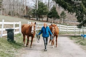 Groundwork Exercises for Young Horses (Tips for Beginners)