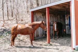 Warm Blooded Horses
