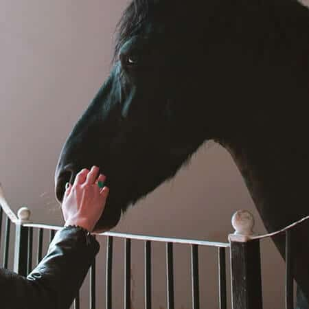 Names for Horses that are Black