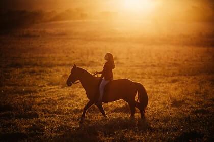 How long do Percheron horses live?