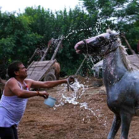 How to Hydrate a Dehydrated Horse
