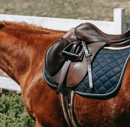 How to Saddle Break a Horse