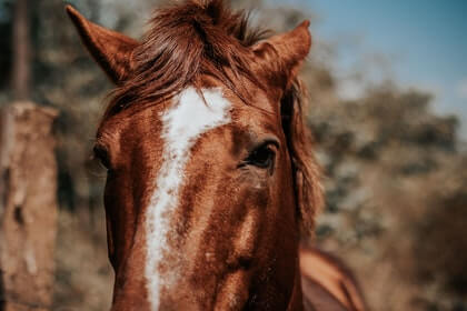 Controlling your Horse's Movement